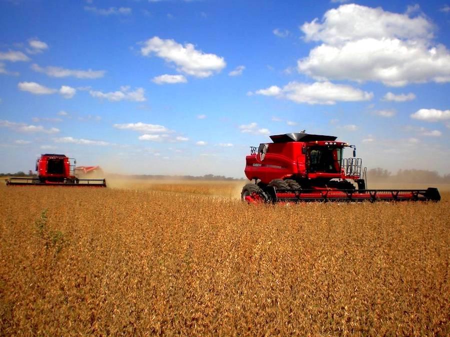 Estiman un escenario favorable para envíos de cereales locales