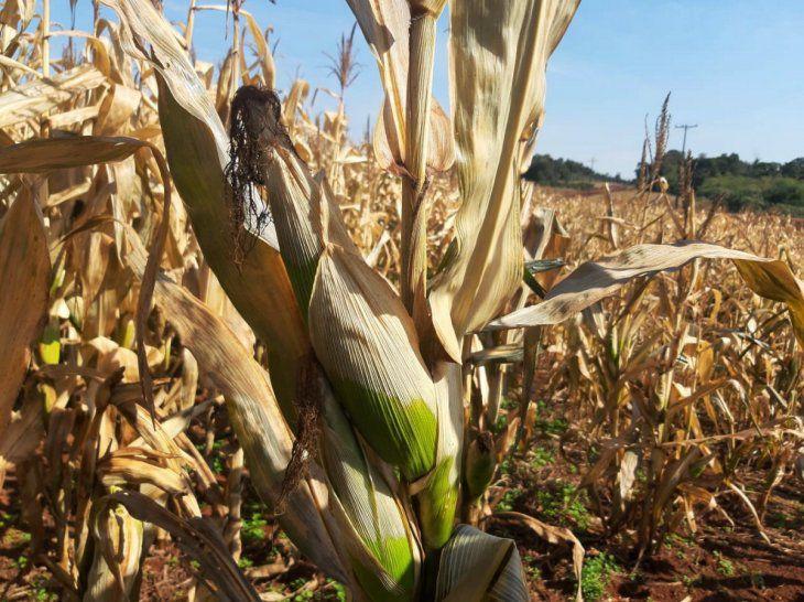 Heladas no dan tregua y preocupa daño en cultivos de maíz y trigo