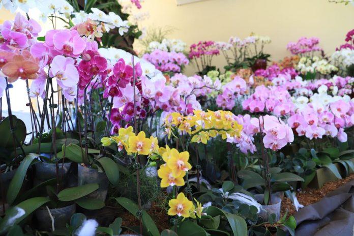 Habilitan la Expo Feria de Orquídeas en sede del MAG de San Lorenzo